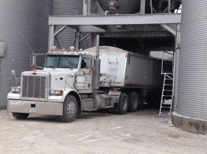 Loading the Peterbilt, to send grain to market.