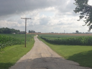 Looking down the the farm's driveway this morning, you can see the corn is developing pretty well.  And now it's tall enough that you cannot see over it to view the  drowned-out spots!
