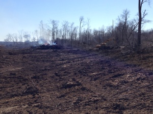 Looking south from the north edge of the woods-clearing work