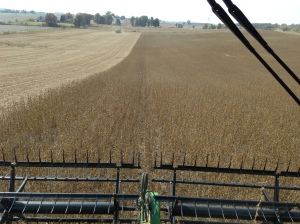 View from the seat of the S680, cutting DCB at the Dunn farm
