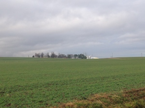 Viewing the main farm and the growing wheat cover crop.