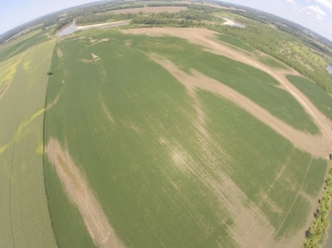 "Here, above the Nellie farm, you can see damage to the soybeans that is not apparent as  you drive by on US 50.  This view is looking north, and you can see White River's curving across the north end of this field.  The bare stripe to the right is ""wolf bayou', where the river water flowed in to submerge the bean crop.  Even though there is a levee along the river, it ends downstream and allows the flood waters to 'back into' the field here.  At least the levee stops the incredible damage from direct current flowing out of the river at flood stage."