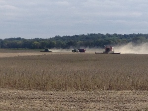 Here, we're cutting soybeans at the Pond farm on Thursday afternoon