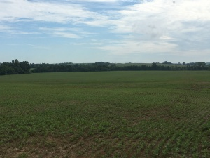 Here is a view of the Lett farm, main field. These soybeans were planted on May 30.