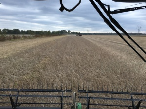 This is the final pass of harvesting for 2016. It is on the east side of the Freddie farm.