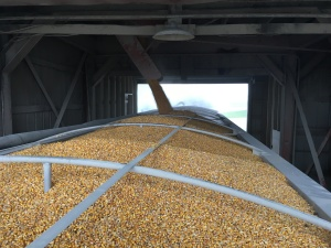 It's neat to watch this pretty corn drop into the truck